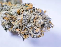 Girl Scout Cookies weed strain